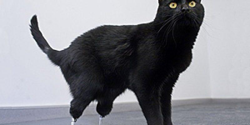 Oscar – El gato biónico