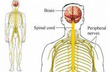 El Síndrome de Guillain-Barré, enfermedad autoinmune