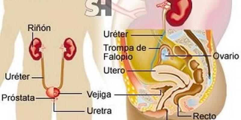 Lesión medular e infecciones urinarias