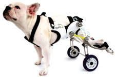 Discapacidad animal: Silla de ruedas para perros
