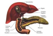 Certificado discapacidad Visceral: Páncreas, requisitos Argentina