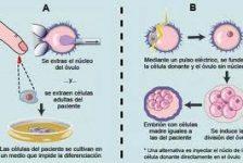 Discapacidad y tratamiento con células madre