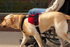 Ley Perros de asistencia País Vasco España