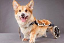 Perros discapacitados no los abandonen