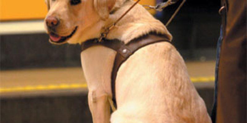 Ley de perros guía Andalucía