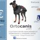 Discapacidad animal arnés canino para posteriores