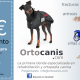 Discapacidad animal y fisioterapia veterinaria