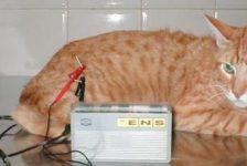 Discapacidad animal fisioterapia y rehabilitación de gatos