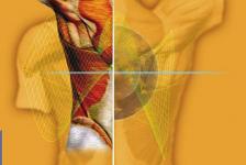 Traumatología y afecciones cardiovasculares manual de fisioterapia
