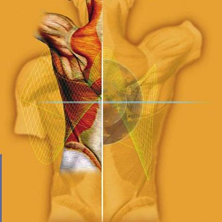 manual-fisioterapia-traumatologia-afecciones-cargiovasculares