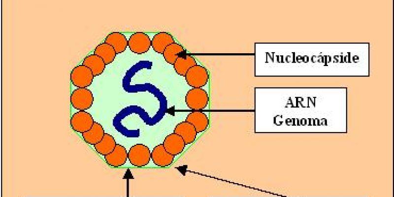 Poliomielitis biología del virus de la Polio