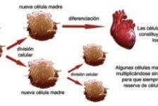 Células madres la medicina del futuro