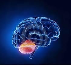 Daño cerebral adquirido guia para familiares