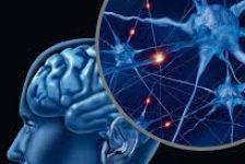 Daño cerebral adquirido manual de apoyo para familiares