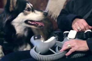 Derby-perro-protesis-impresas-3D-2