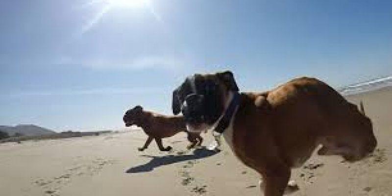 Duncan Lou Who el perro de dos patas