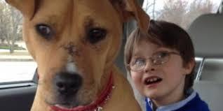 Familia adopto perro maltratado para su hijo con autismo