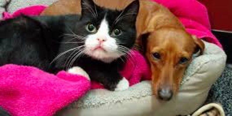 Gata tetraplejica sobrevivio gracias a cuidados de perro callejero