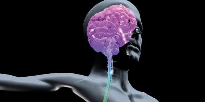 Daño cerebral adquirido guia para familias